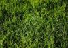 Traktorki do trawy